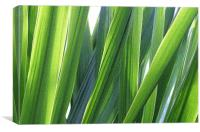 strands of grass, Canvas Print