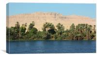 Nile Palms