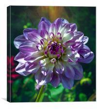 Hello Flower, Canvas Print