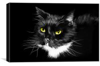 Domestic Black and White cat canvas print, Canvas Print