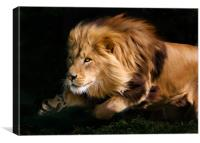 Raw Lion Power, Canvas Print