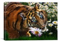 Tiger Flower, Canvas Print