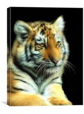 Tiger Cub, Canvas Print