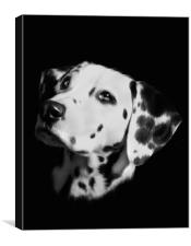 Dalmation, Canvas Print