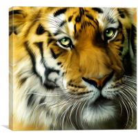 Sumatran Tiger Close Up, Canvas Print