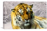 Sumatran Tiger in Snow, Canvas Print