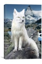 White Fox at Matterhorn, Canvas Print