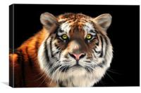 Siberian Tiger, Canvas Print