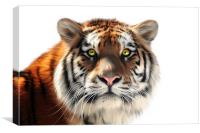 Siberian Tiger on White, Canvas Print