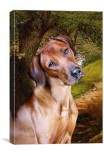 Ridgeback Woodland, Canvas Print