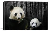 Giant Pandas, Canvas Print