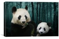 Woodland Giant Pandas, Canvas Print