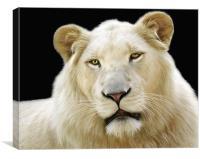 White Lion, Canvas Print