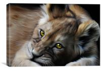 Little Cub, Canvas Print