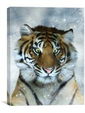 Not Quite the Full Deck - Tiger art canvas print, Canvas Print