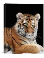 Amur Tiger, Canvas Print