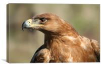 Tawny Eagle, Canvas Print