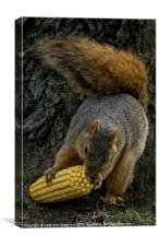 Corn for Lunch