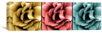 Three Roses in Macro, Canvas Print