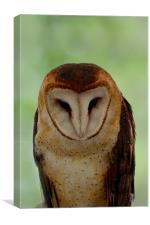 Portrait of a Barn Owl, Canvas Print