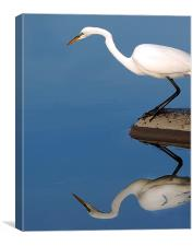 Mirrored Egret, Canvas Print