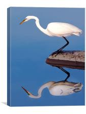Egret For Mike