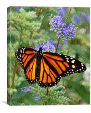 Open-Winged Monarch