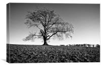 EXTON TREE, Canvas Print