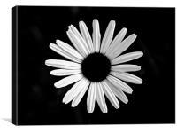 Floating Flower, Canvas Print