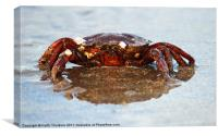 Crab, Canvas Print