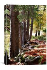 Wooded area Autumn, Canvas Print
