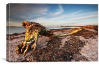 Beached Tree, Canvas Print