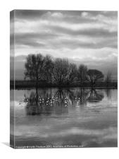 Musselburgh Lagoons., Canvas Print