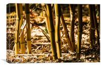 Bamboo Cane, Canvas Print