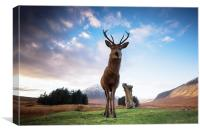 Highland Stag, Canvas Print