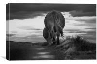 Cows Heading Home, Canvas Print