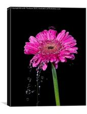 Flowers being watered, Canvas Print
