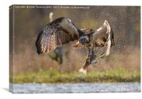 Osprey and Trout, Canvas Print
