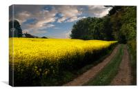 Rape seed field, Canvas Print