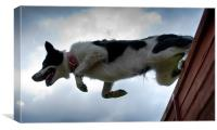 Tara Jumping fence, Canvas Print