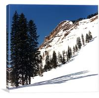 Simply Snow, Canvas Print