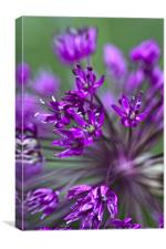Purple Flowers, Canvas Print