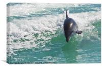 Dolphin, Walvis Bay, Namibia