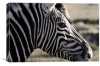 Plains Zebra, Etosha, Canvas Print