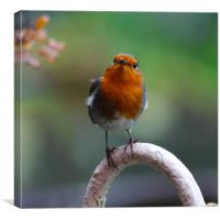 Wet Robin, Canvas Print
