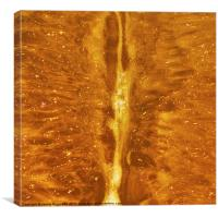 Orange Flesh, Canvas Print