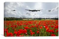 Poppy Fly Past, Canvas Print