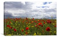 Summer Poppy Field, Canvas Print