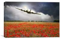 B-17 Poppy Pride, Canvas Print