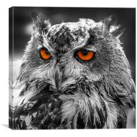 Eagle Owl Orange Eyes, Canvas Print